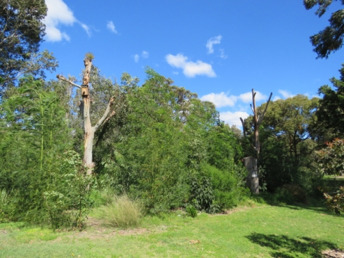 The dead habitat trees are visible from some vantage points