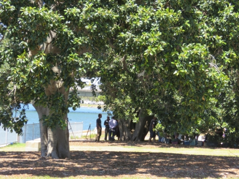 People gathered hear talks about the project under the beautiful fig tree that was saved from death by brackish water & erosion.