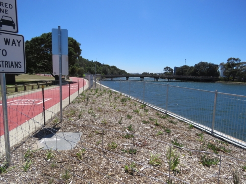 More habitat areas alongside the Alexandra Canal.  This will look amazing in a few months time.  It travels all the way to the bridge over the Canal.  The bitumen road has been painted rusty red with signage saying that it is a shared zone.  It looks cared for.