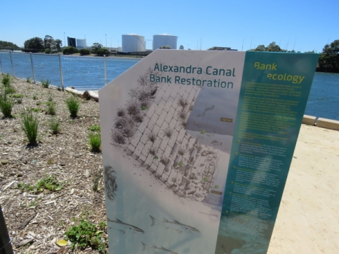 A section of the educational signage that shows the sandstone riverbank.  I was amazed to read that dugong bones with butcher marks had been excavated when the Alexandra Canal was constructed. Dugongs lived here about 5,500-years-ago.