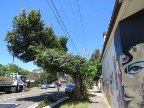 January 2017 tree pruning by Ausgrid in Renwick Street Marrickville.  This is one of multiple examples on this street.