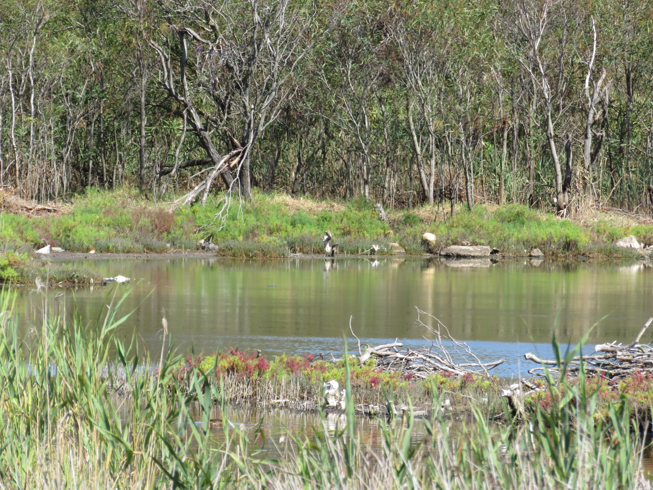 Landing Lights Wetland threatened | SAVING OUR TREES