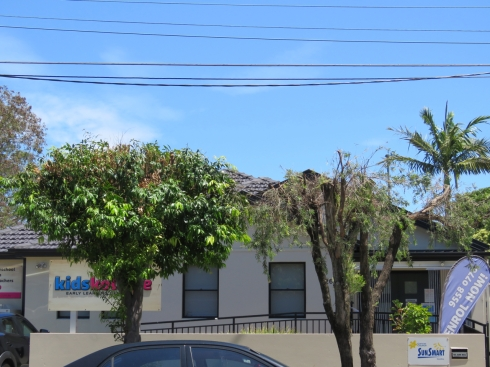 More examples of street tree pruning by Ausgrid in street trees in Renwick Street Marrickville
