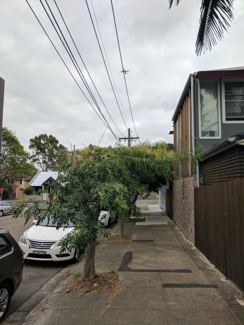 Photo of street tree pruning done just two weeks ago by Ausgrid in Walenore Avenue Newtown.  Photo by Chris O'Dell used with thanks.