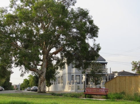 Note the magnificent Melaleuca street tree.  This is the result when tall growing street trees are planted on the side without powerlines.  Photo shows new park bench and new garden bed,